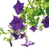 8 ideálnych rastlín, ktoré si môžete vysadiť k altánku