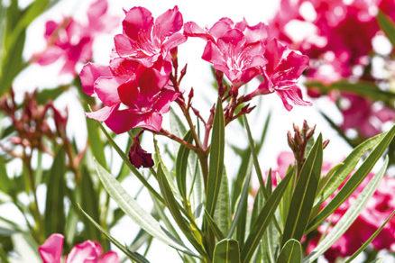 8 rastlín, ktoré nesmú chýbať na slnečnej terase