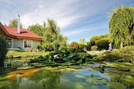 Čo by ste mali vedieť o starostlivosti o záhradné jazierko