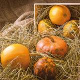 Užitočné tipy na pestovanie a spracovanie tekvíc