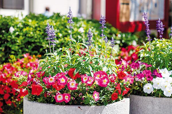 Jednoduché tipy ma skrášlenie letnej záhrady