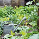 Biologická ochrana proti škodcom
