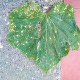 Ochorenia uhoriek a ako s nimi bojovať
