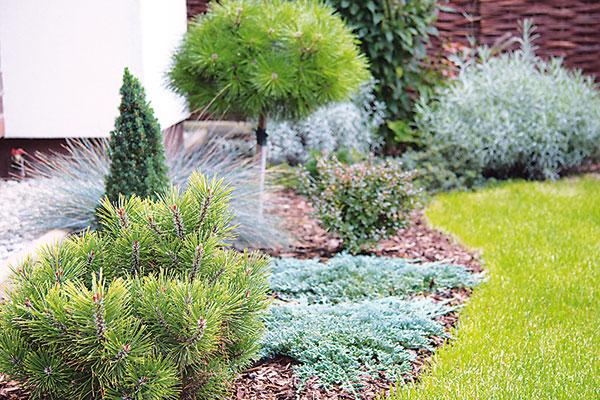 Akými rastlinami môžete doplniť záhradu na jeseň