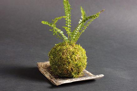 Netradičné pestovanie rastlín: Vyrobte si originálnu kokedamu