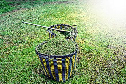 Je pokosená tráva vhodný druh nástielky k živému plotu?
