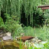 Darujte si zdravie z vlastnej záhrady