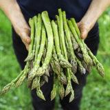 Najchutnejšia jarná zelenina: Ako si vypestujete vlastnú špargľu?