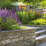10 rastlín ideálnych do predzáhradky