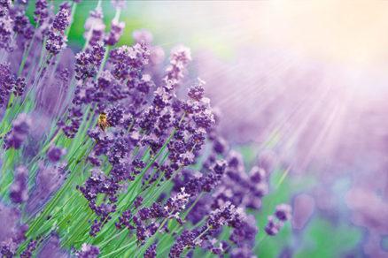 Ako využiť levanduľu v priestore vašej záhrady