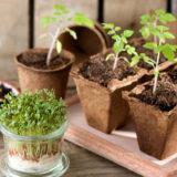 Aké druhy zeleniny si môžeme v zime vypestovať doma?
