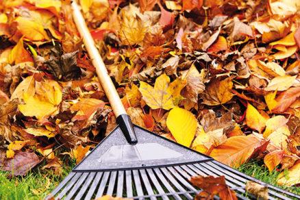 Predzimná príprava záhrady: Ako sa postarať o zem, stromy a kríky