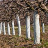 Decembrové práce v ovocnej záhrade: Čomu by ste mali venovať pozornosť?