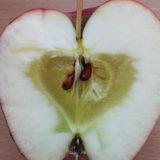Čo spôsobuje sklovitosť jabĺk