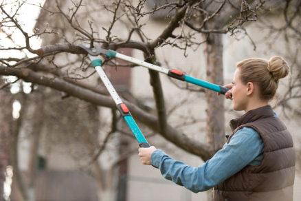 Aké práce v záhrade vás čakajú v januári?