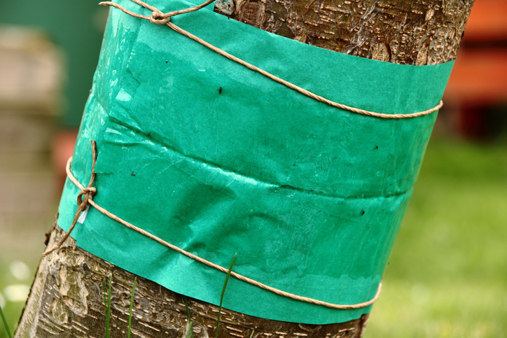 Ochrana pred škodcami začína v zime: Ako ochrániť stromy?