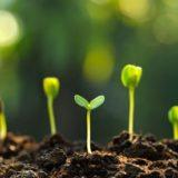 Fakty o pestovaní priesad: Ako, kedy a na čo myslieť pri výsadbe