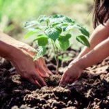 Ako ochrániť priesady pred škodcami a chorobami?