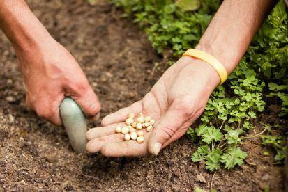 Ako sa o svoju záhradu postaráte teraz, takú budete mať neskôr úrodu