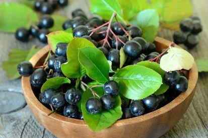 Nové plodiny do vašej ovocnej záhradky? Skúste muchovník, hurmikaki, aróniu, či dulu