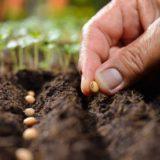 Akú zeleninu sejeme a sadíme vo februári?
