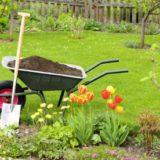 Ako získať lacno množstvo nových sadeníc?