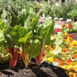 Aké druhy zeleniny, byliniek a okrasných rastlín pestovať spolu?