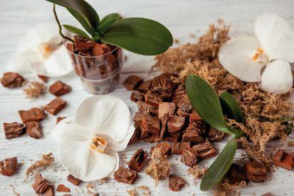 Ako presadiť a znovu naštartovať orchidey?