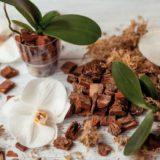 Ako presadiť a znovu naštarovať orchidey?