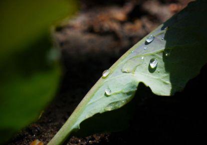 Akej zelenine sa darí v tieni a v polotieni?