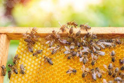 Príprava včiel na jarnú znášku