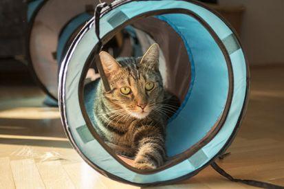 Mačka v byte a v dome: Ako ju vychovať?