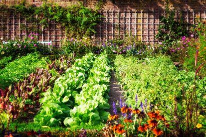 Akú zeleninu a ovocie môžete pestovať aj v malej záhradke?