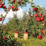 Ako založiť ovocný sad