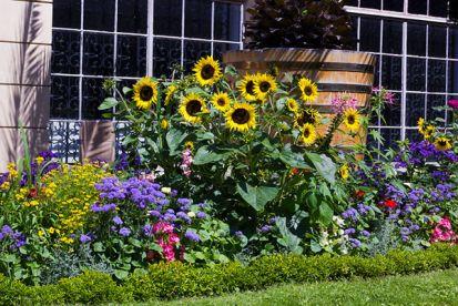 Máte v rodine alergika? Tieto kvety nepestujte!