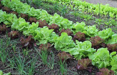 Ako udržať pôdu zdravú