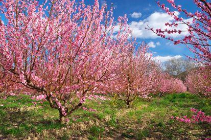Apríl v záhrade: Na čo by ste nemali určite zabudnúť?