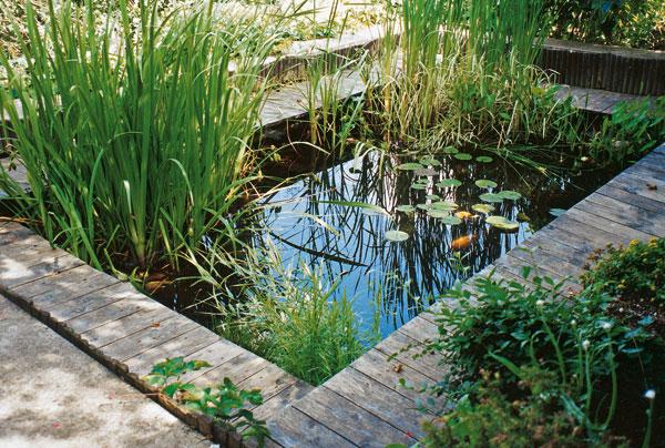 jazierka a vodne nadrze prijemne spestrenie vasej zahrady