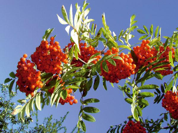 jedovate rastliny vbyte azahrade
