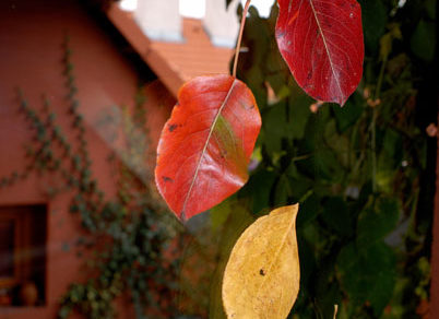 jesenne inspiracie