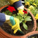 Kalendár záhradkára pre apríl