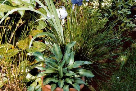 kvetinace a vysadbove nadoby