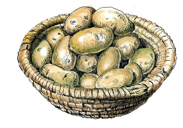 na zimu treba skladovat iba zdrave zemiaky
