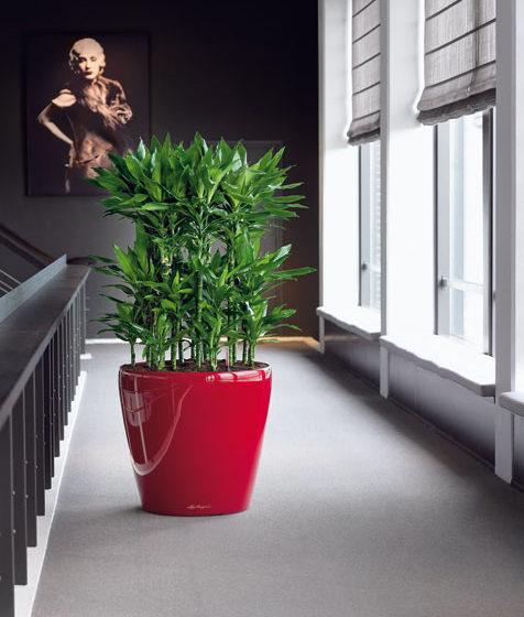 naordinujte si sest rastlin do obyvacky