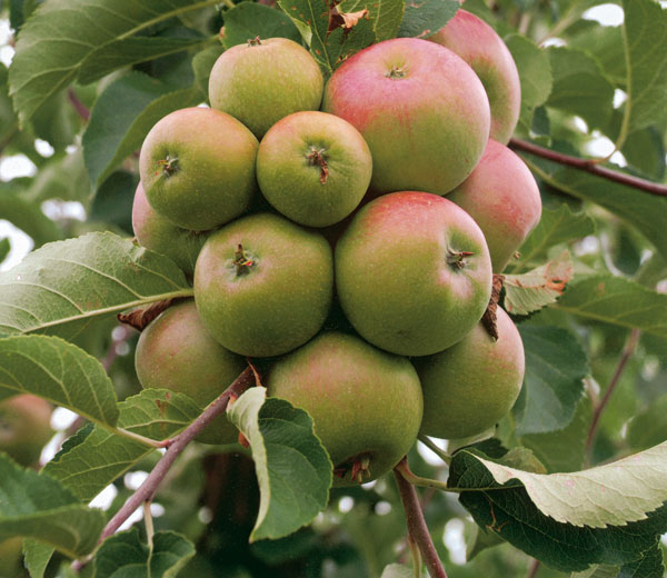 nezabudajme na prebierku plodov