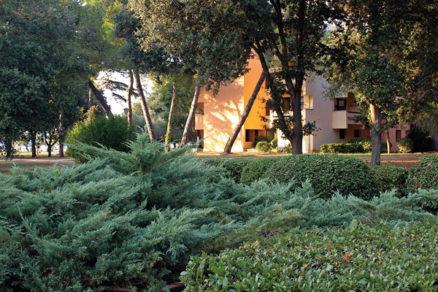 okrasne dreviny vhodne na strihanie a tvarovanie ii. cast