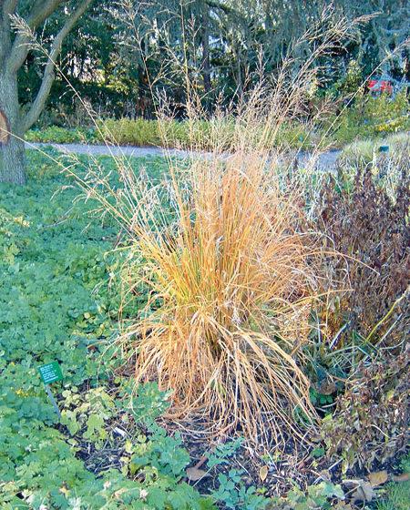 Okrasné trávy v záhrade II