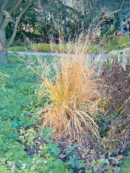 okrasne travy v zahrade ii