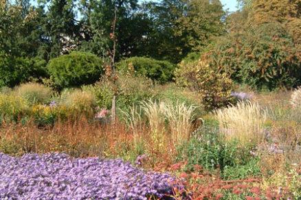 okrasne travy v zahrade iii
