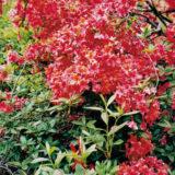 ozivte zahradu kvetinami